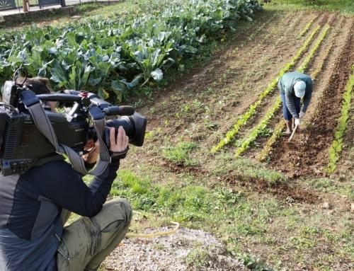 Il TGR Lazio racconta la Fattoria Vetuscolana e l'impegno sostenibile della Diocesi